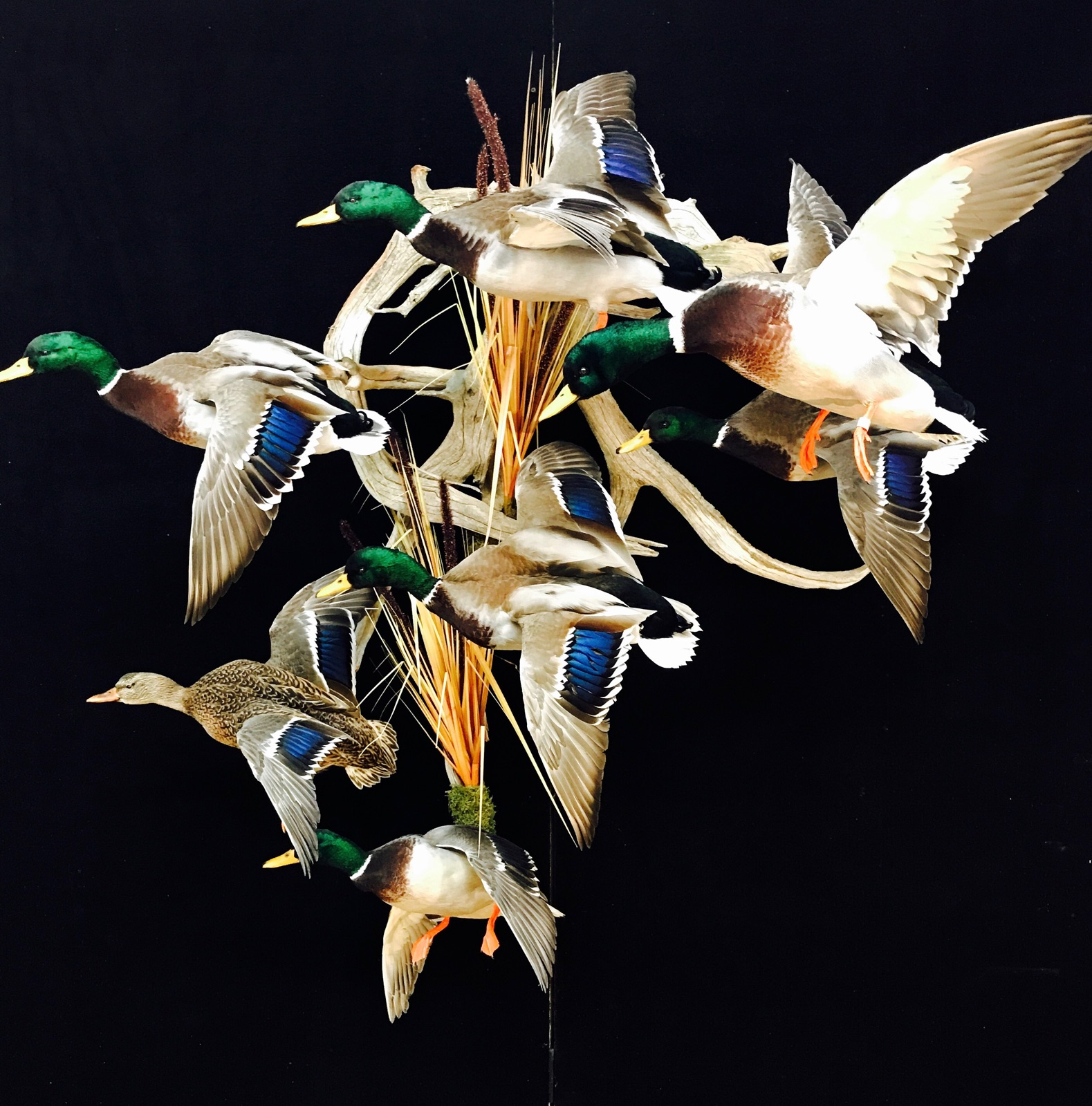 Water Fowl Taxidermy Best In Oklahoma