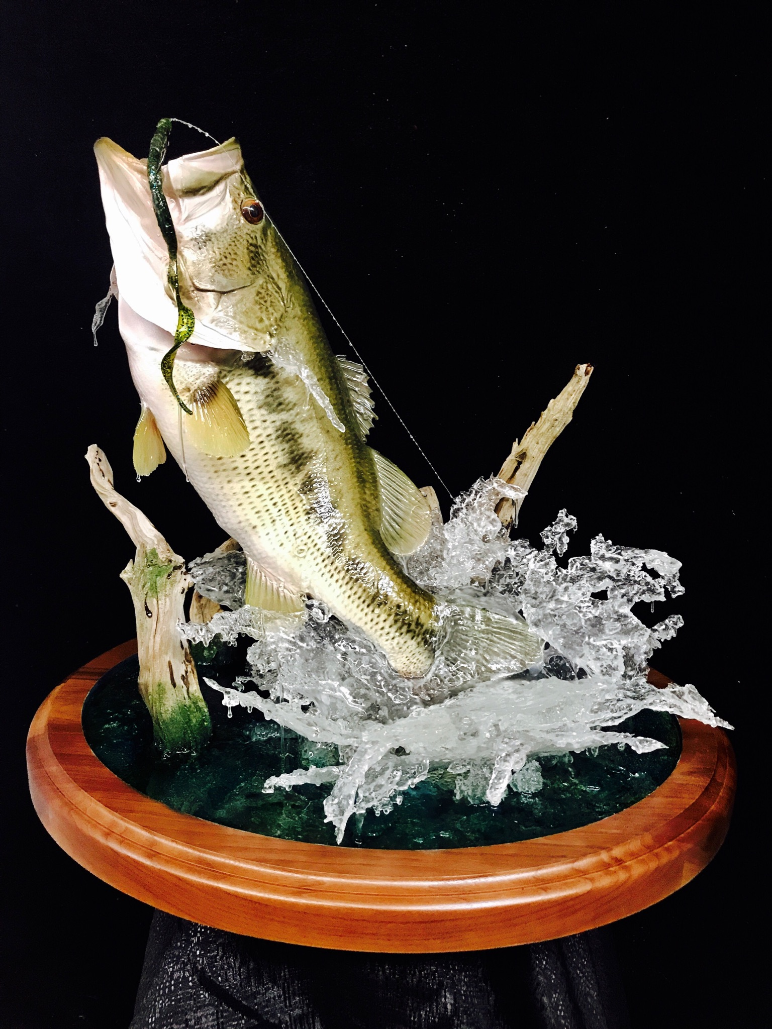 Top taxidermy tips