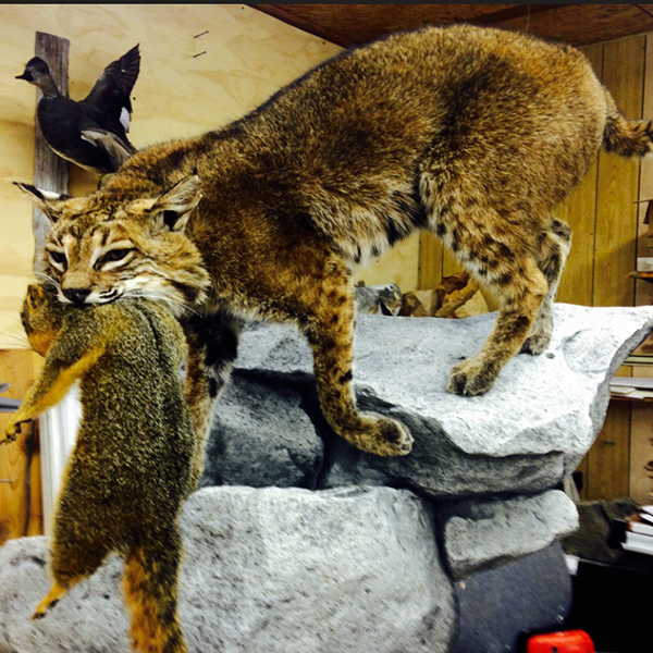 VanMar Taxidermy