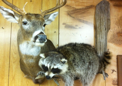 COON-WHITETAIL