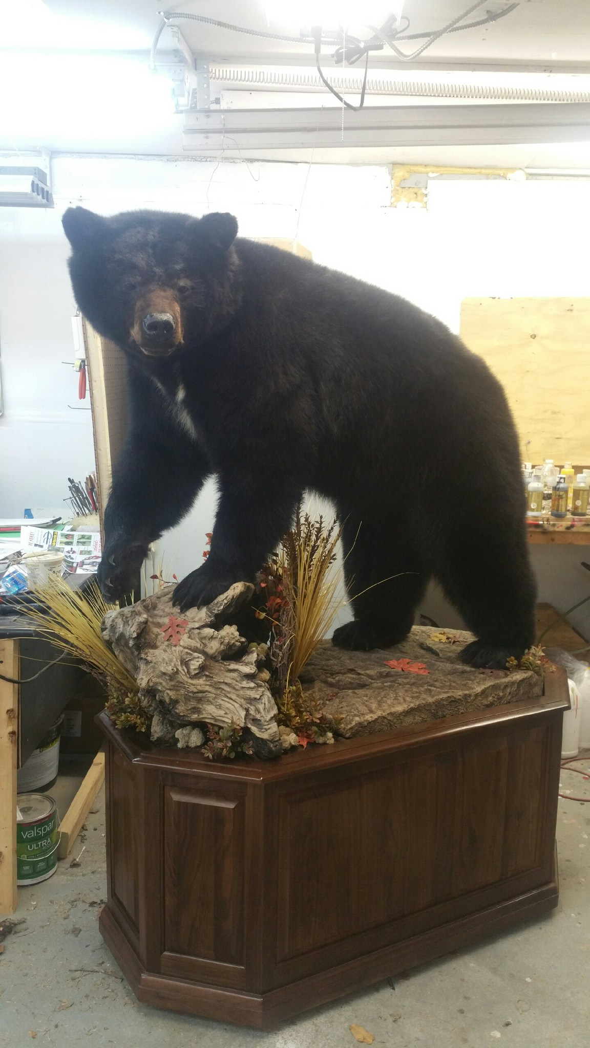 BIG GAME TAXIDERMIST