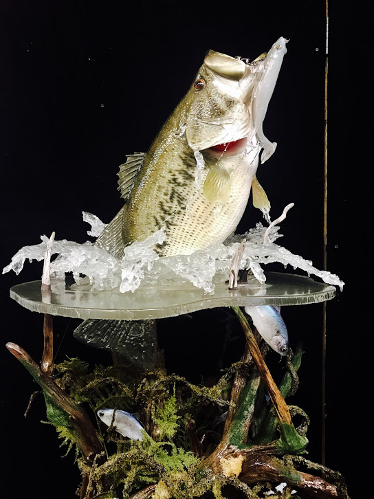 Vanmar Taxidermy By Vance Montgomery World Award Winning